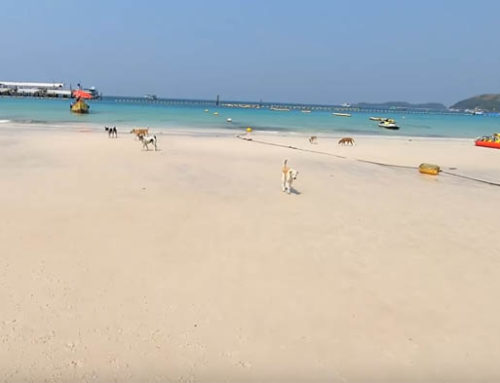 Koh Larn All to Myself – Guest Vlog NDtvi Thailand